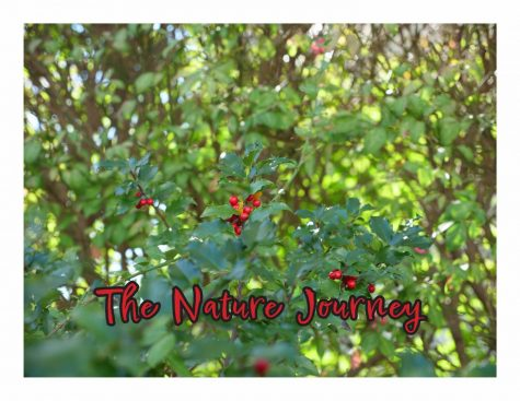 The NHS Nature Journey - Photo Essay